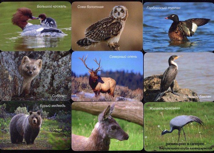 Серия календарей «Байкало-Ленский заповедник фауна » 29 штук 2016 год