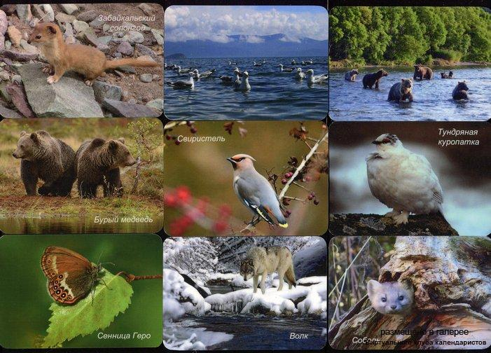 Серия календарей «Байкальский заповедник фауна» 28 штук 2016 год