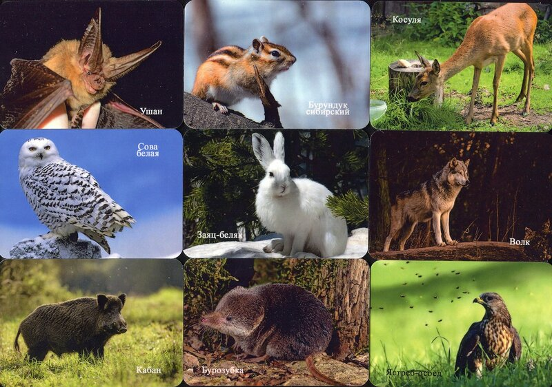 Серия календарей «Башкирский заповедник фауна» 20 штук 2019 год