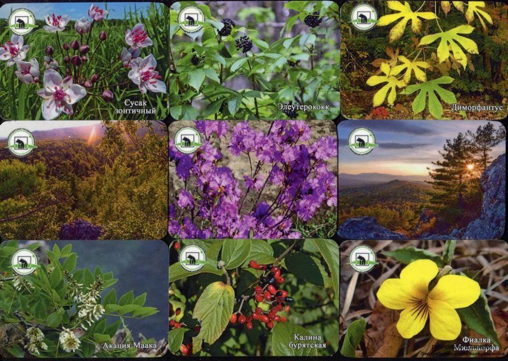 Серия календарей «Большехритский заповедник флора» 18 штук 2019 год