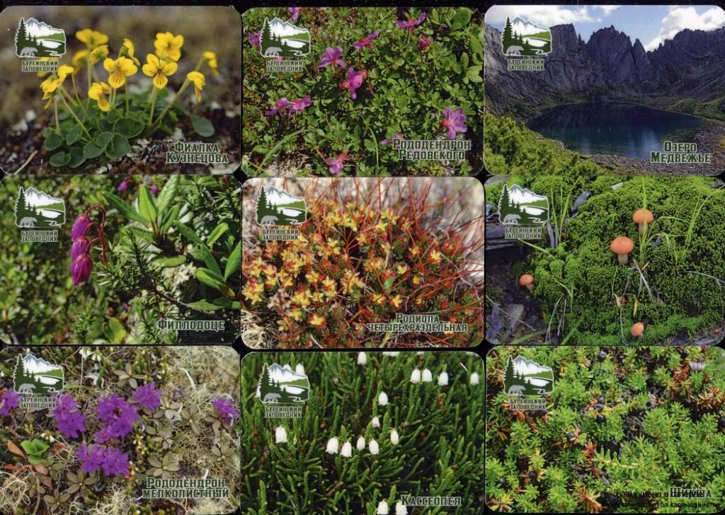Серия календарей «Буреинский заповедник флора» 20 штук 2019 год