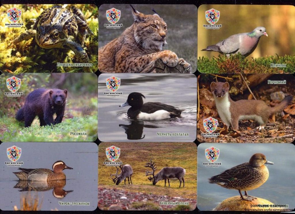 Серия календарей «Висимский заповедник фауна» 20 штук 2020 год