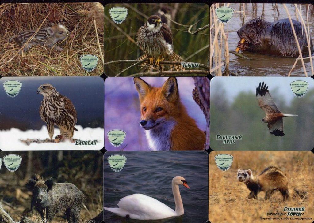 Серия календарей «Волгокамский заповедник фауна» 20 штук 2020 год