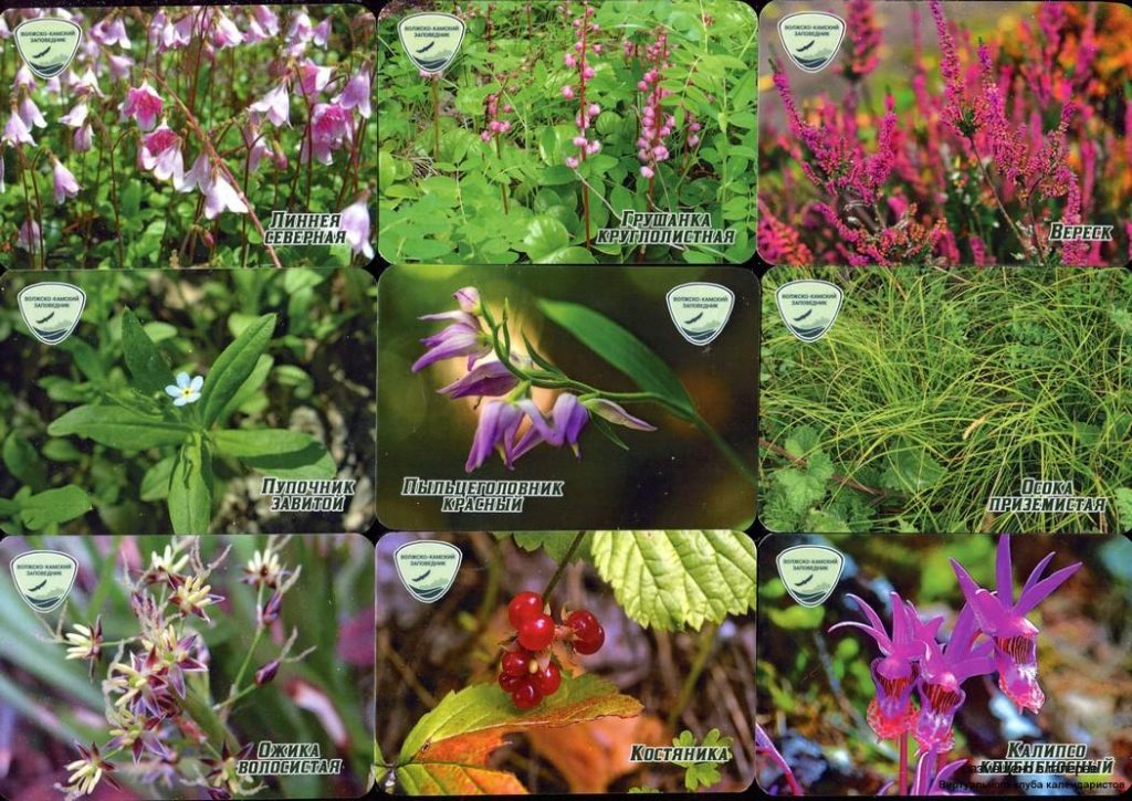 Серия календарей «Волгокамский заповедник флора» 20 штук 2020 год