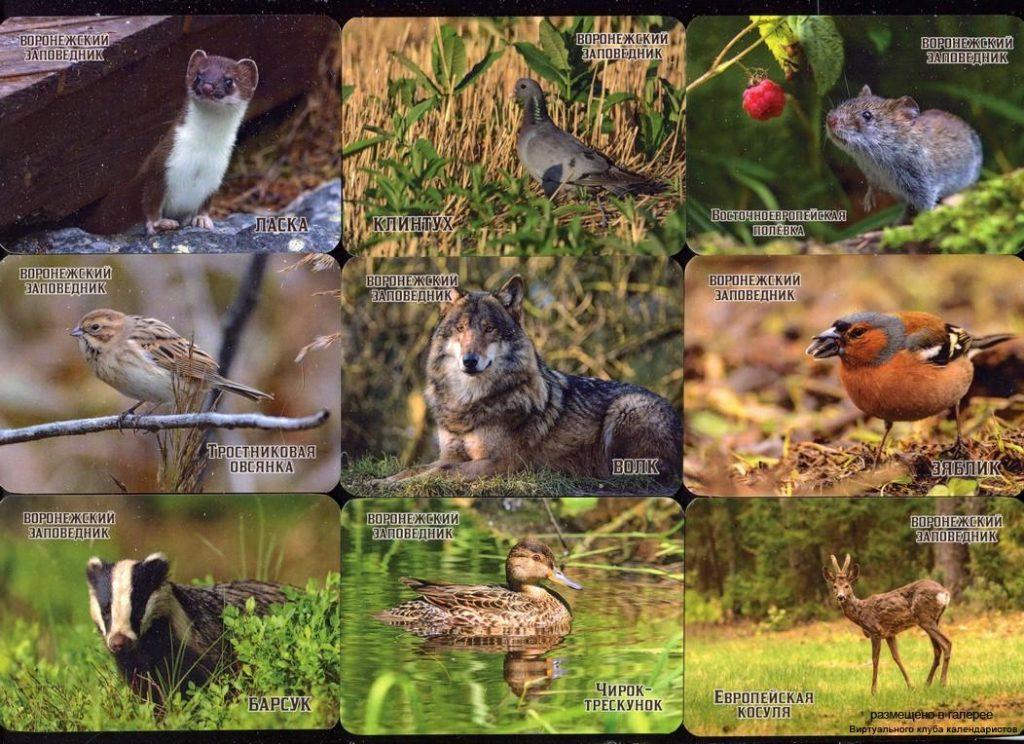 Серия календарей «Воронежский заповедник фауна» 23 штуки 2020 год Измени
