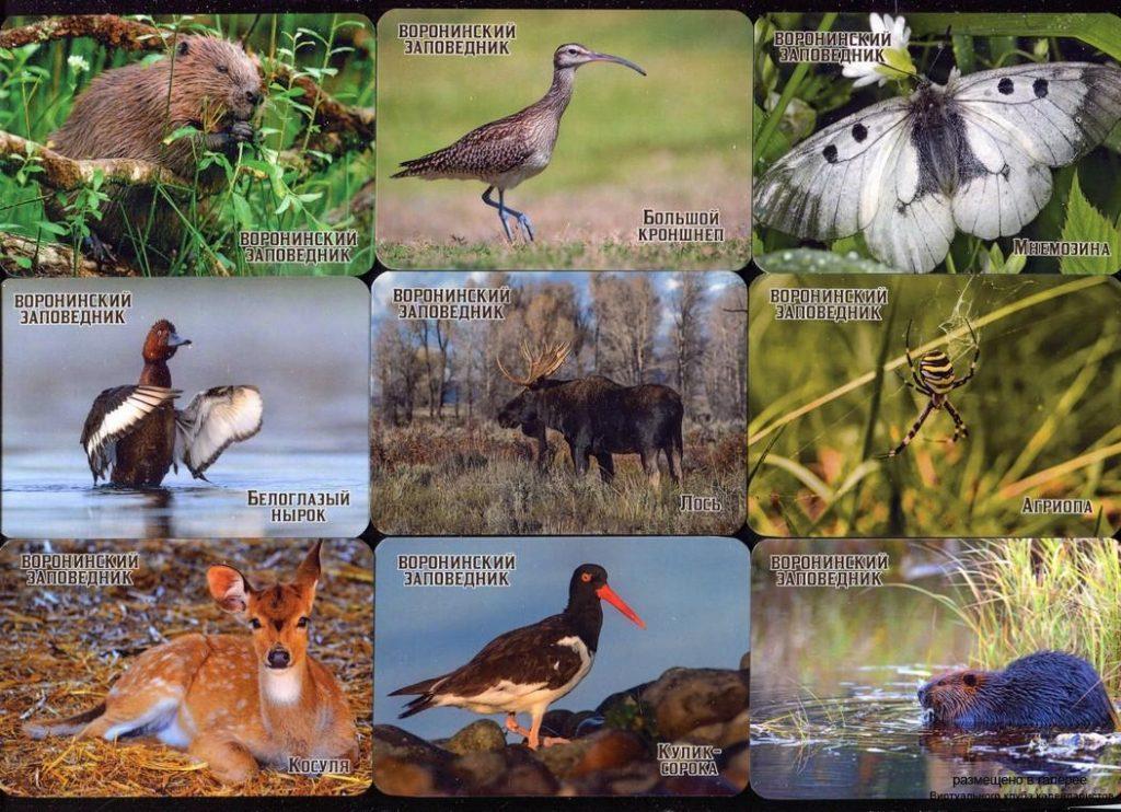 Серия календарей «Воронинский заповедник фауна» 20 штук 2020 год