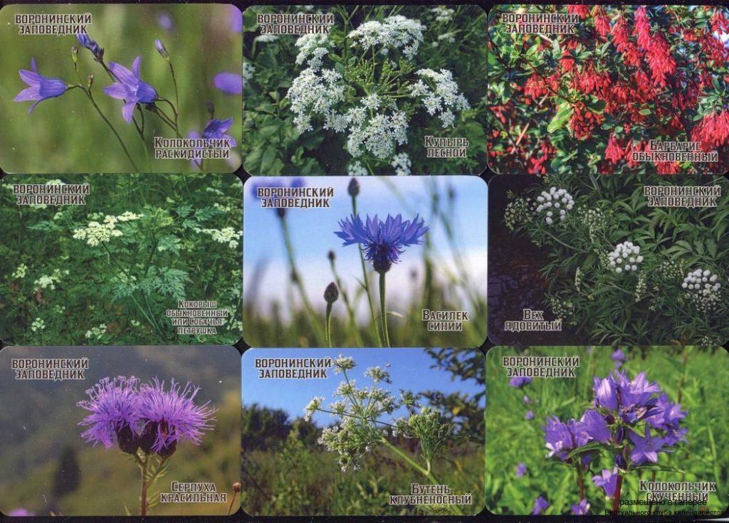 Серия календарей «Воронинский заповедник флора» 20 штук 2020 год