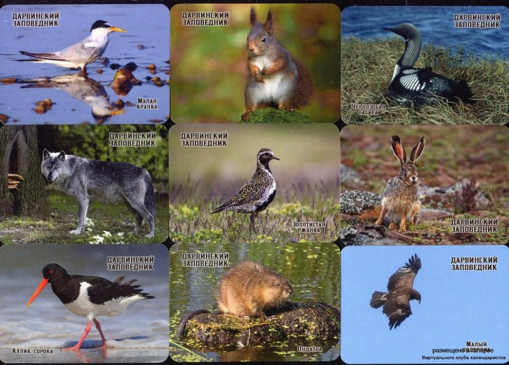 Серия календарей «Дарвинский заповедник фауна» 20 штук 2020 год