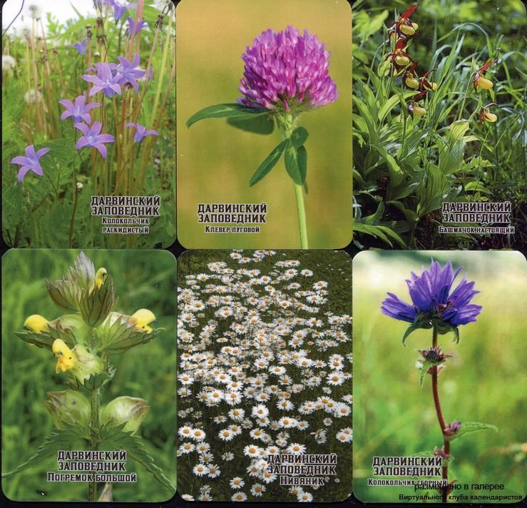 Серия календарей «Дарвинский заповедник флора» 22 штуки 2020 год