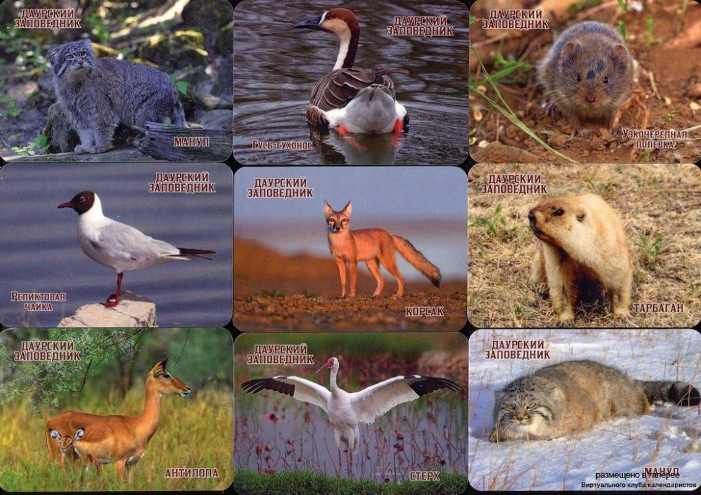 Серия календарей «Даурский заповедкик- фауна» 22 штуки 2020 год