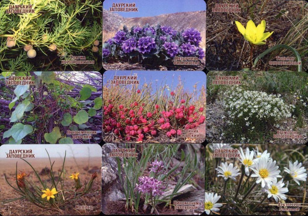 Серия календарей «Даурский заповедкик-флора» 22 штуки 2020 год