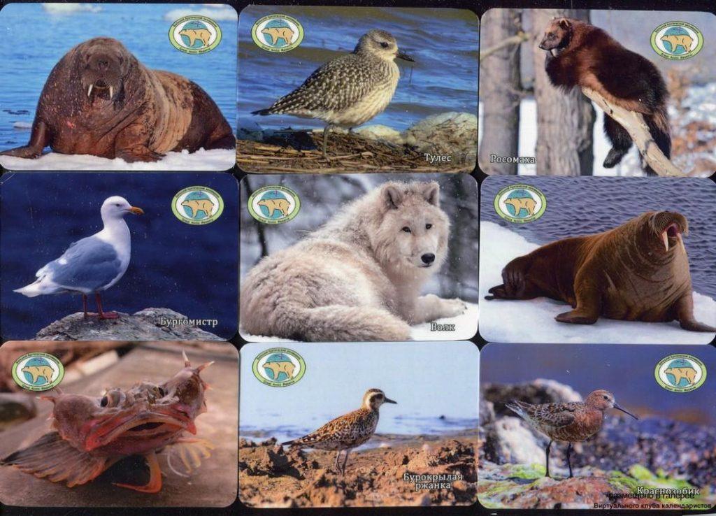 Серия календарей «Большой Арктический заповедник фауна» 24 штуки 2019 год