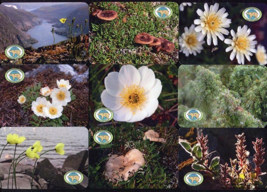 Серия календарей «Большой Арктический заповедник флора» 22 штуки 2019 год