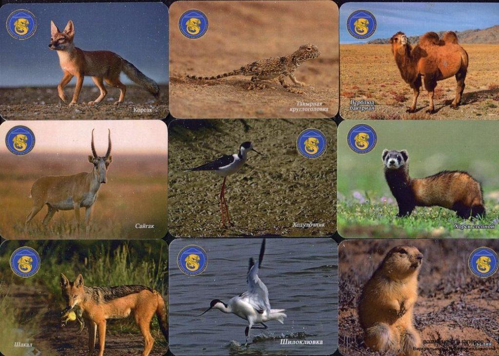 Серия календарей «Богдинско-баскунчакский заповедник фауна» 20 штук 2019 год