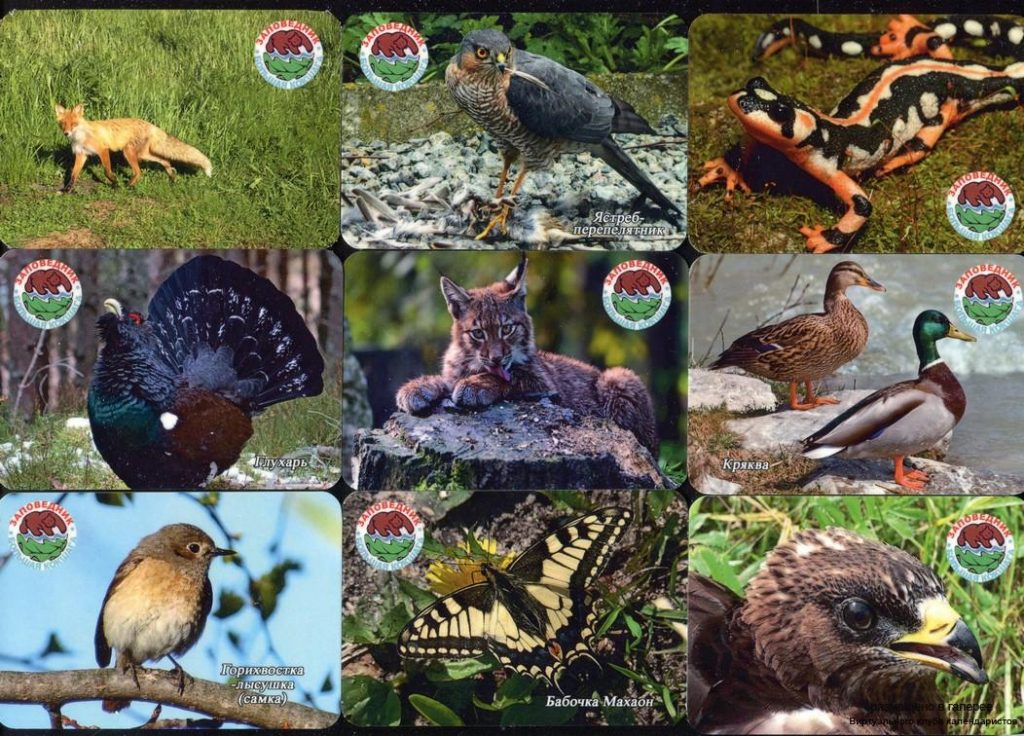 Серия календарей «Заповедник Большая Кокшага фауна» 22 штуки 2019 год