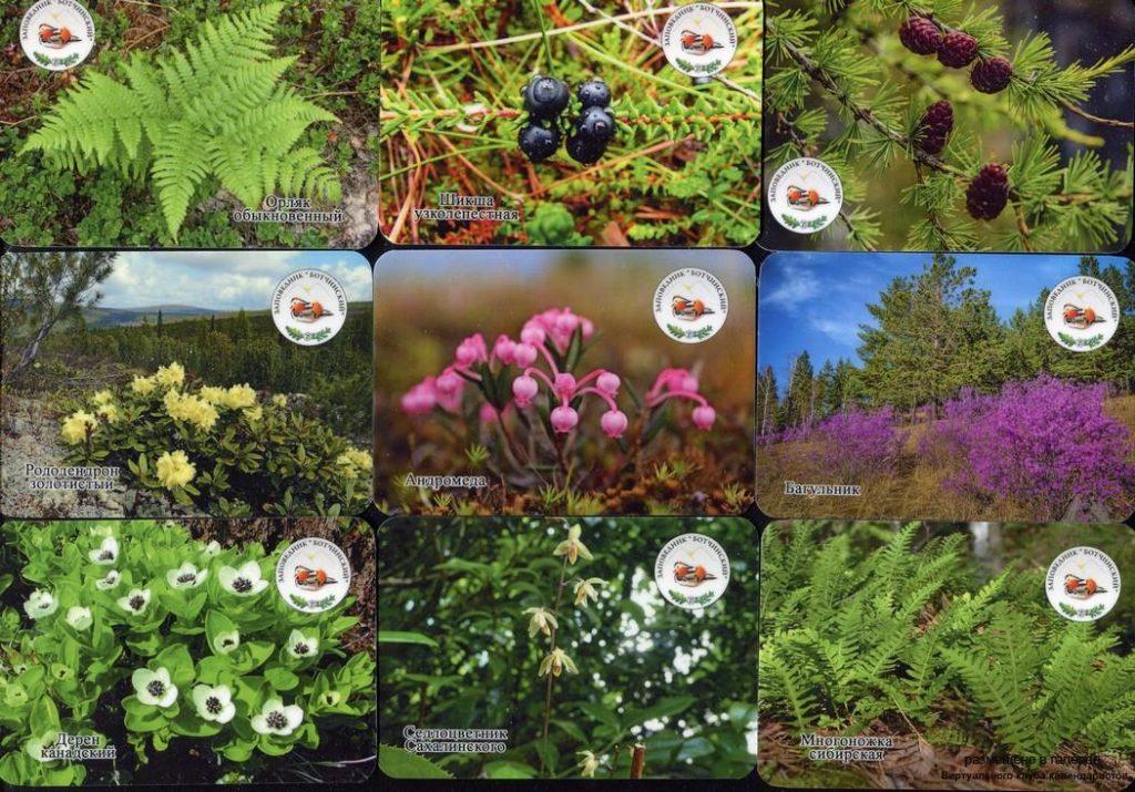 Серия календарей «Заповедник Ботчинский флора» 20 штук 2019 год
