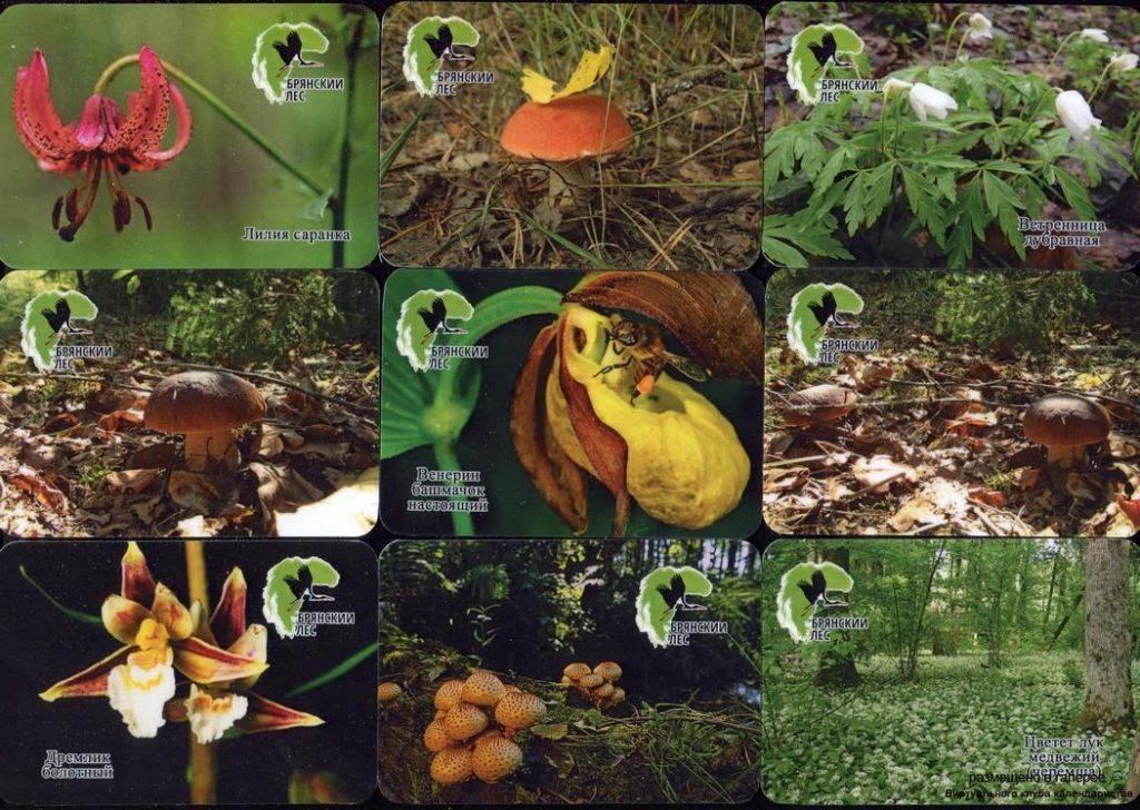 Серия календарей «Заповедник Брянский лес флора» 20 штук 2019 год