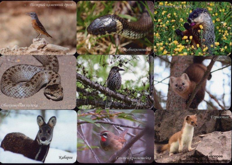 Серия календарей «Баргузинский заповедник фауна» 14 штук 2017 год