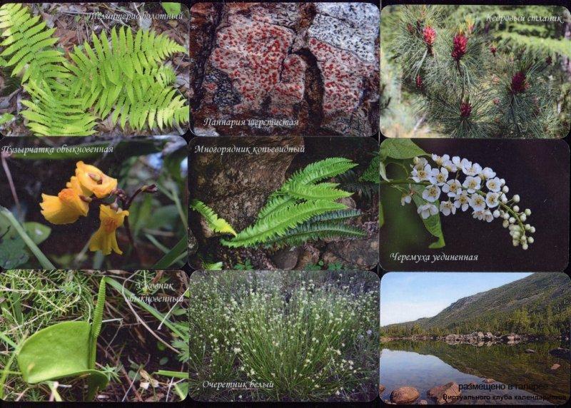Серия календарей «Баргузинский заповедник флора» 18 штук 2017 год