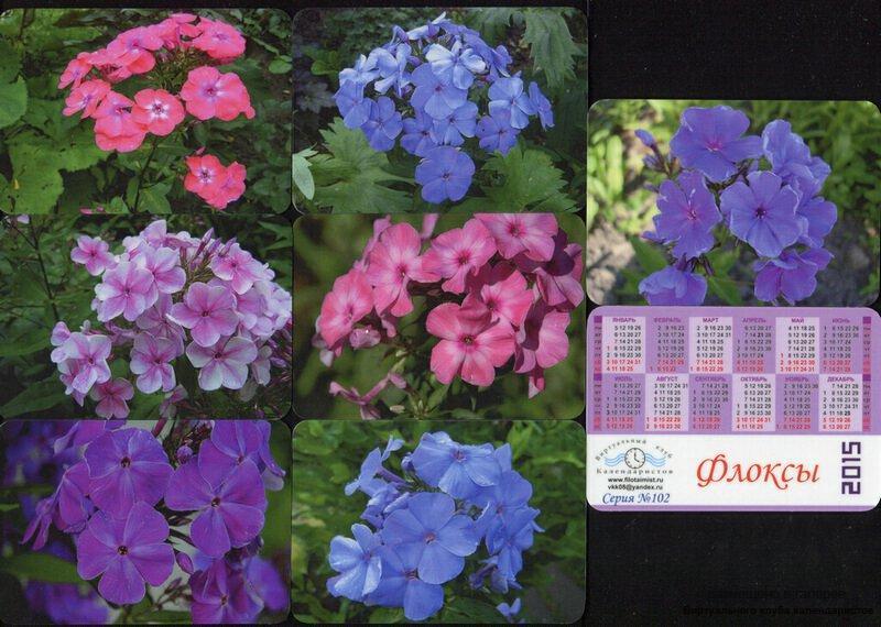 Серия календарей «Флоксы» 16 штук 2015 год