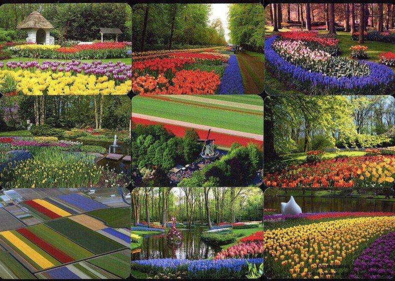 Серия календарей «Парк цветов Кекенхоф» 22 штуки 2016 год