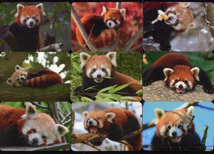 Серия календарей «Малая панда» 16 штук 2016 год