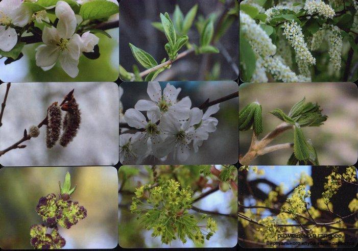 Серия календарей «Пробуждение природы » 14 штук 2016 год