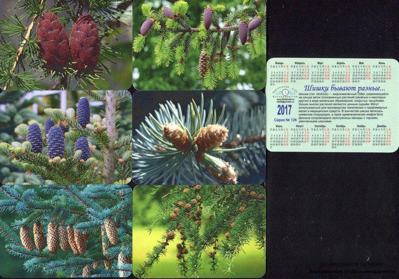 Серия календарей «Шишки бывают разные» 24 штуки 2017 год