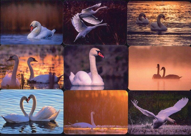 Серия календарей «Лебеди» 20 штук 2019 год