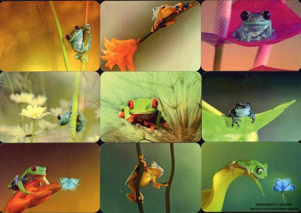 Серия календарей «Лягушки» 20 штук 2019 год