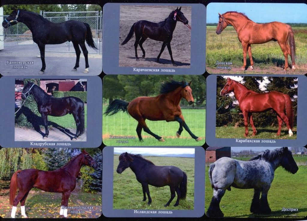 Серия календарей «Породы лошадей» 24 штуки 2019 год