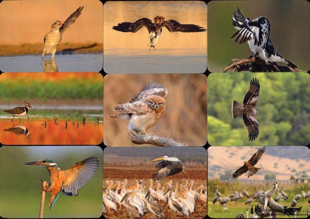 Серия календарей «Птичий базар» 20 штук 2019 год