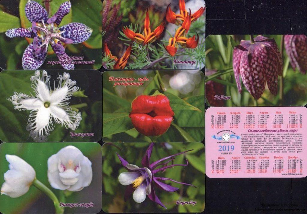 Серия календарей «Самые необычные цветы мира» 20 штук 2019 год
