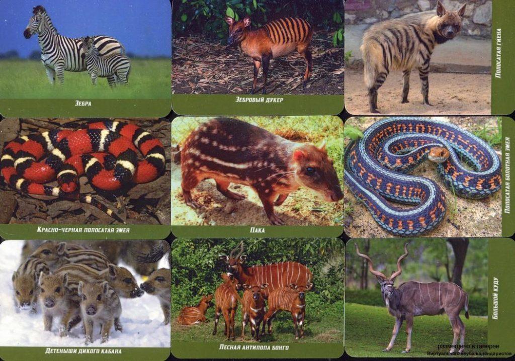 Серия календарей «Животные полосатики» 22 штуки 2019 год