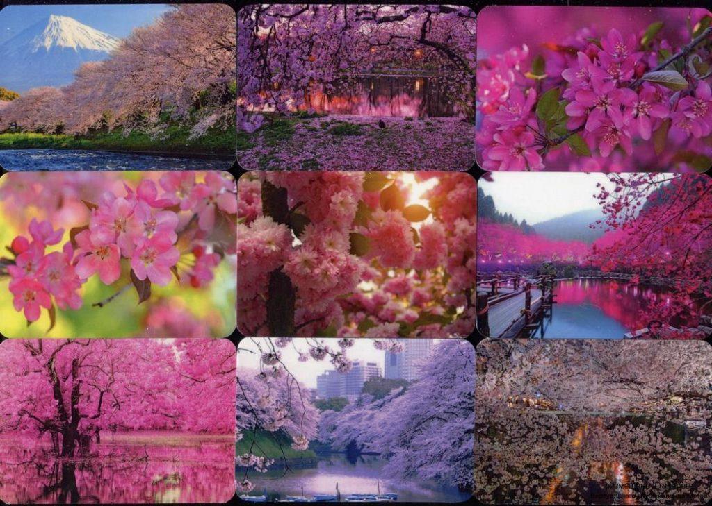 Серия календарей «Цветение сакуры» 20 штук 2020 год