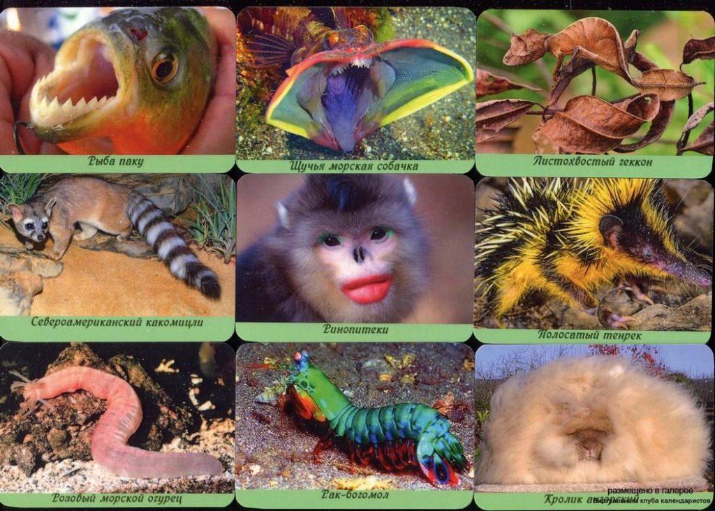 Серия календарей «странные и редкие животные» 22 штуки 2020 год