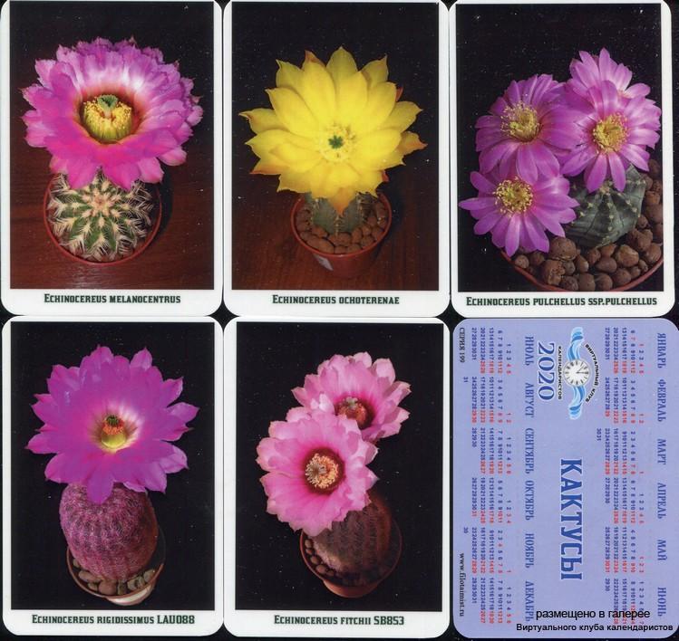 Серия календарей «Кактусы» 22 штуки 2020 год