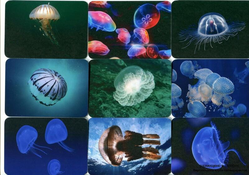 Серия календарей «Медузы» 15 штук 2013 год