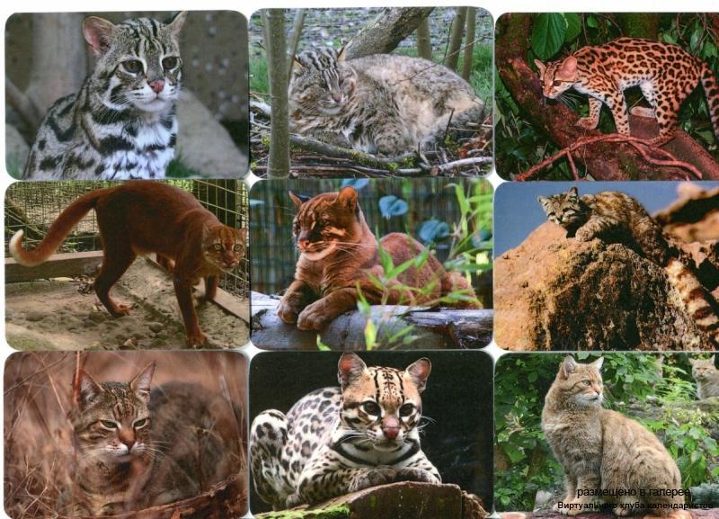 Серия календарей «Малые кошки-2» 18 штук 2013 год