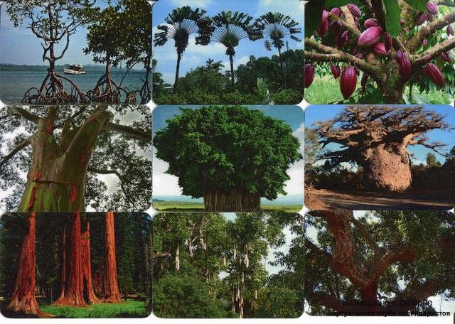 Серия календарей «Необычные деревья» 14 штук 2013 год