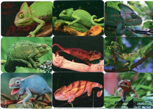 Серия календарей «Хамелеон» 16 штук 2013 год