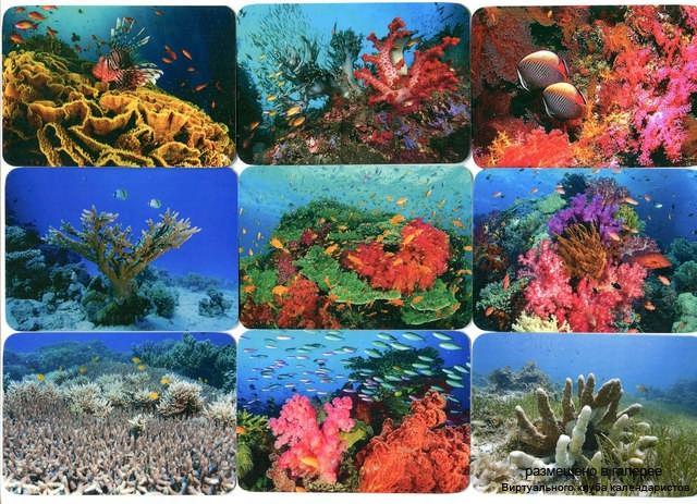 Серия календарей «Кораллы» 16 штук 2013 год
