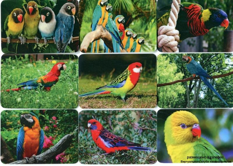 Серия календарей «Попугаи» 18 штук 2013 год