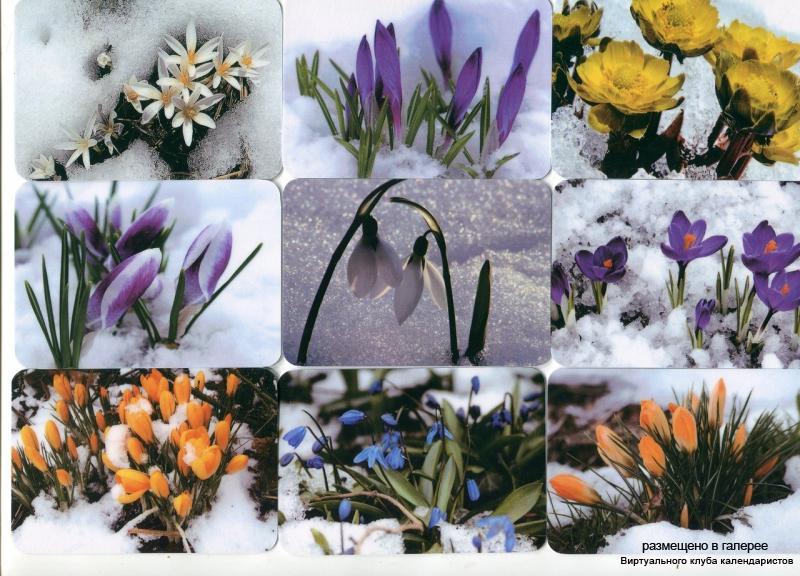 Серия календарей «Цветы под снегом» 16 штук 2013 год