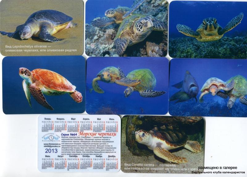 Серия календарей «Черепахи» 16 штук 2013 год