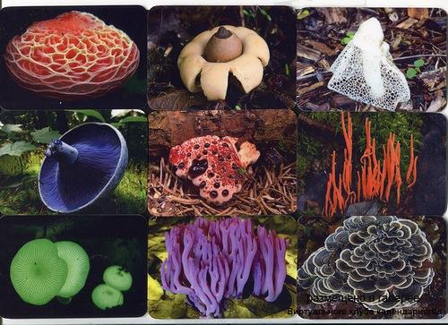 Серия календарей «Удивительные грибы» 20 штук 2014 год
