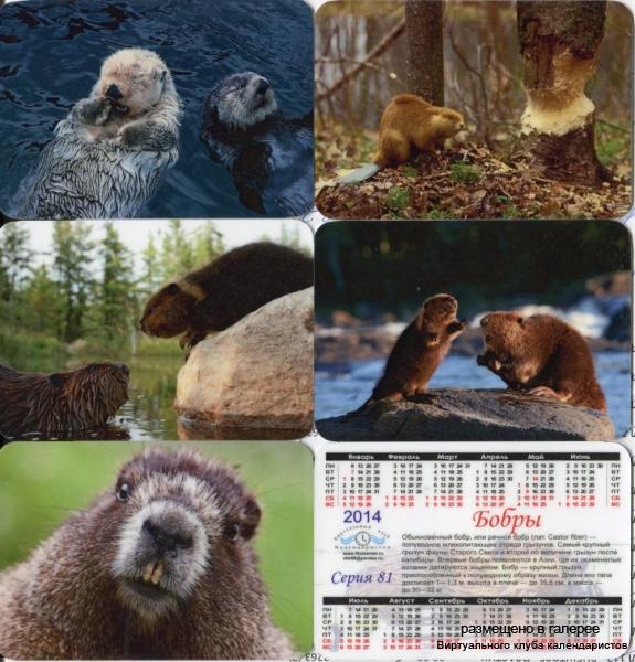 Серия календарей «Бобры» 14 штук 2014 год