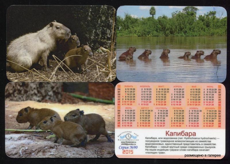 Серия календарей «Капибара» 12 штук 2015 год