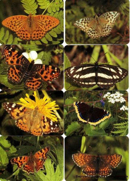 "Серия календарей ""Бабочки"" 16 штук 2010 год"