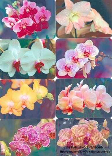 """Серия календарей """"Орхидеи"""" 8 штук 2009 год"""
